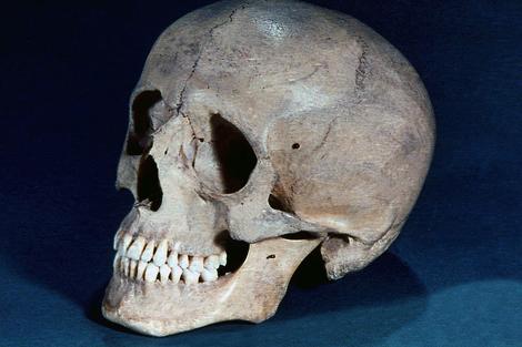 Screenshot 1 de Galería #86997 - Huesos del cráneo y de la cara