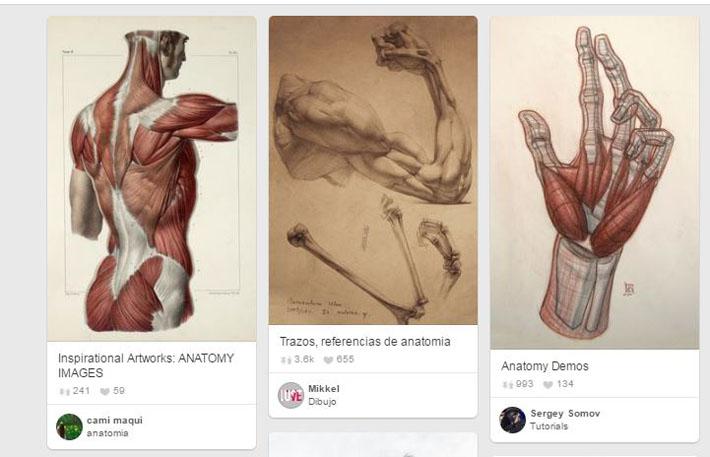 Imágenes sobre anatomía humana
