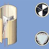 Esquema de las válvulas sigmoideas