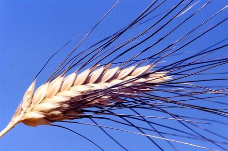 Screenshot 3 de Galería #89011 - Frutos y semillas